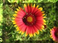 Plant Life Photos