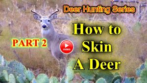 How to skin a deer