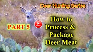 How to process a deer video