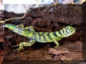 Reptiles Thumbnail Image