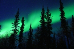 Northern Lights over Pine Trees